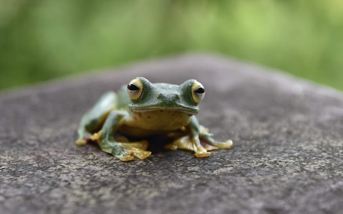 green frog on brown tree trunk